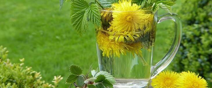 Maslačak u čaši